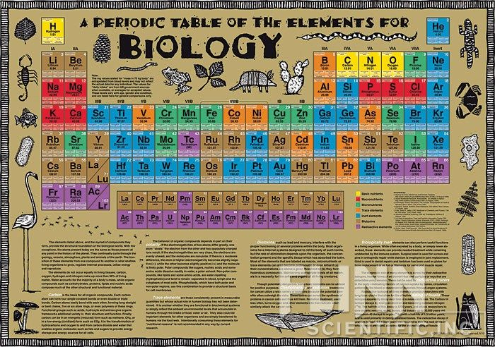 Biology Classroom Decoration Ideas : Best if i had all the in world images on