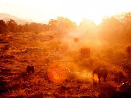 Krugerpark, South-Africa at sunset