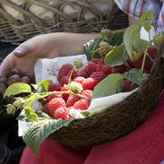 Van Reeuwijk Fruit & Flowers. Pick your own strawberries, rasberries, cherries, tomatos, cucumbers etc. Hoofdweg 1475, Abbenes.