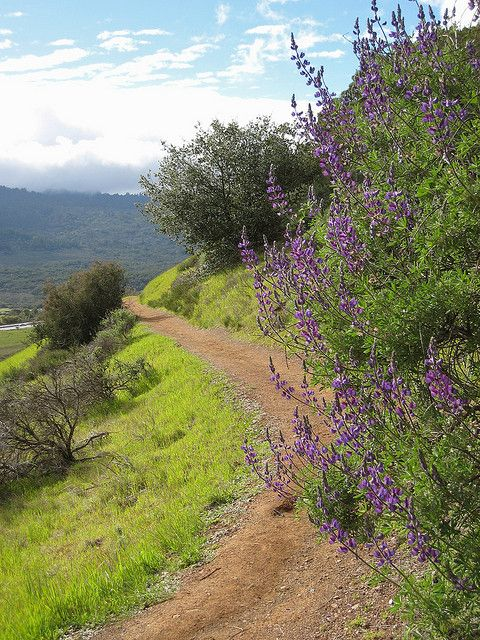 Bay Area Wildflower Hikes--Emerald Hills, Redwood City, California