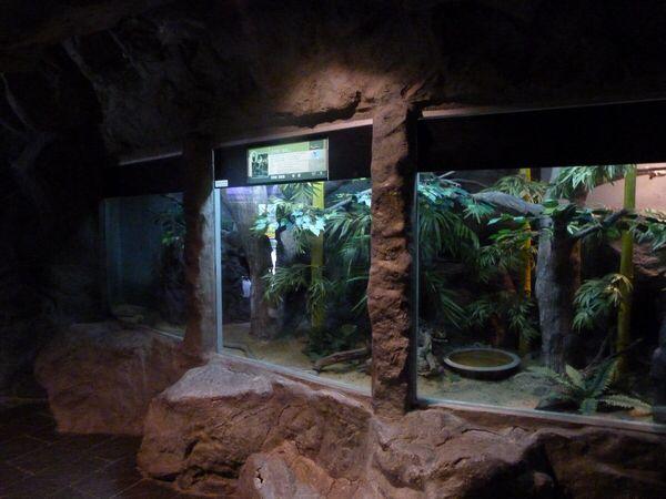 Afbeelding van http://i55.photobucket.com/albums/g144/ralphaba/zoos/Verblijf_koningscobra.jpg.