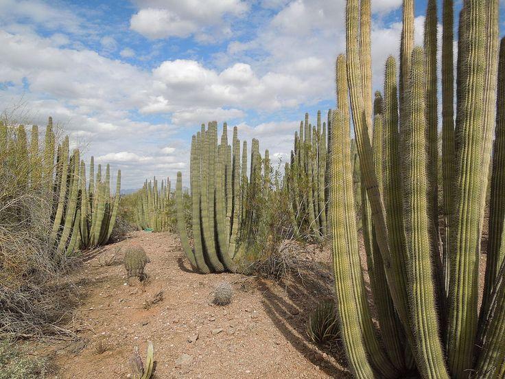 1024pxDesert_Botanical_Garden_Phoenix_Arizona_36.JPG