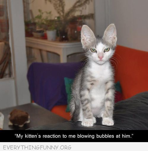 Ok I don't usually pin cat pictures (I'm more of a dog shaming kinda gal) but this cracked me up :)