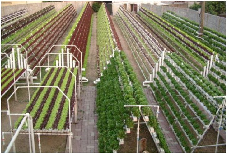 commercial aquaponics system | The next photo is a large scale Hydroponics setup also for commercial ...