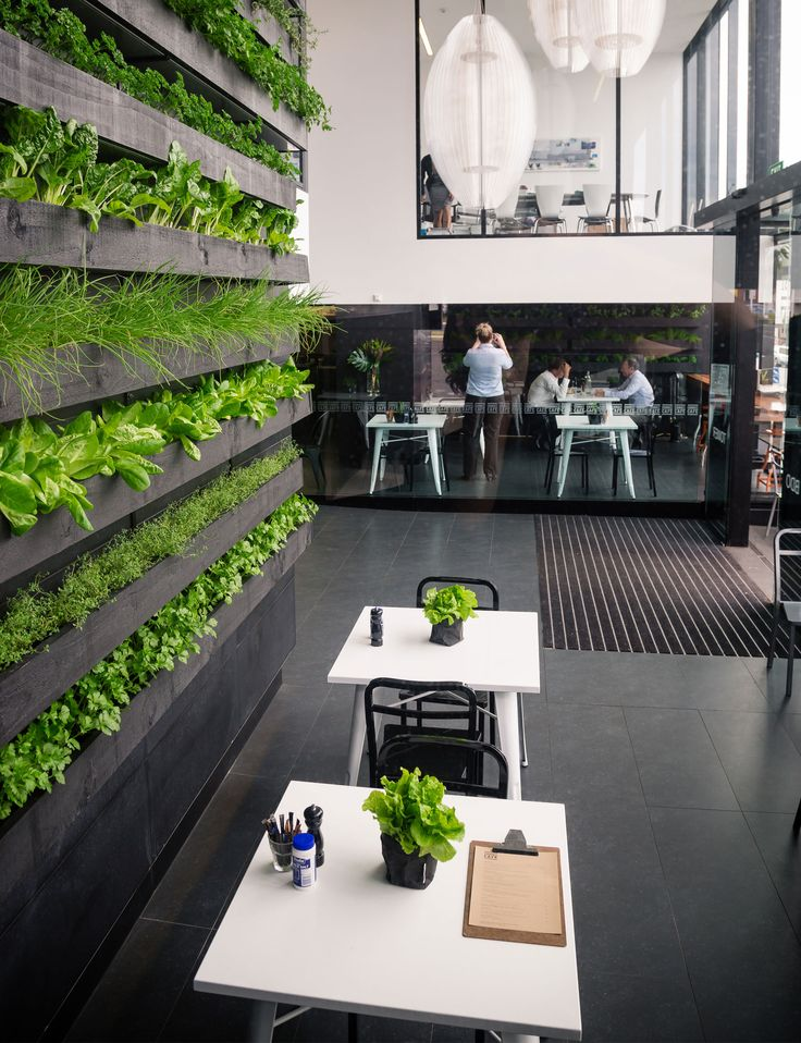 Everything you need to know about living walls