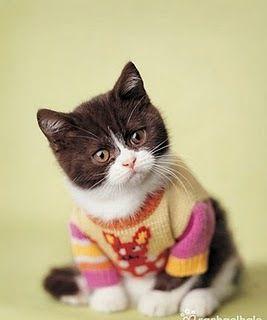cat in a sweater = omg