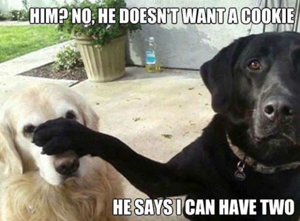 Him? No, he doesn't want a cookie. He says I can have two. Silly dogs!
