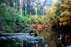 Love the karri forests in South Western Australia- can't wait to go back!