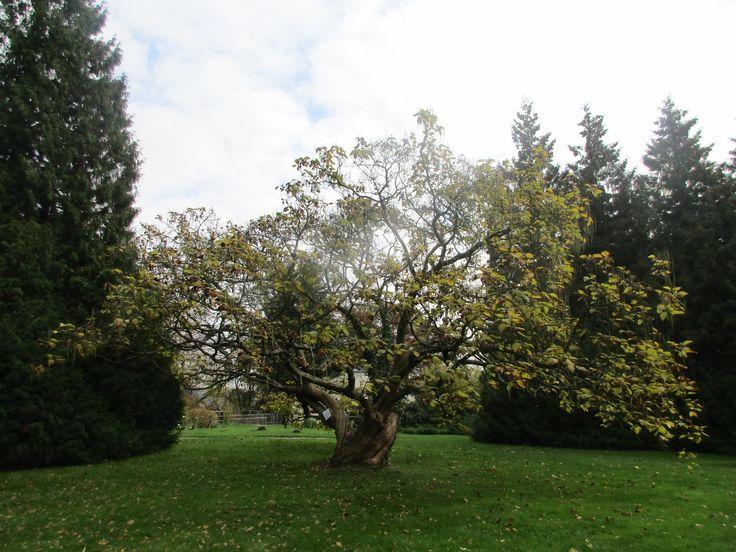 Anglický park u zámku Loučeň - Česko