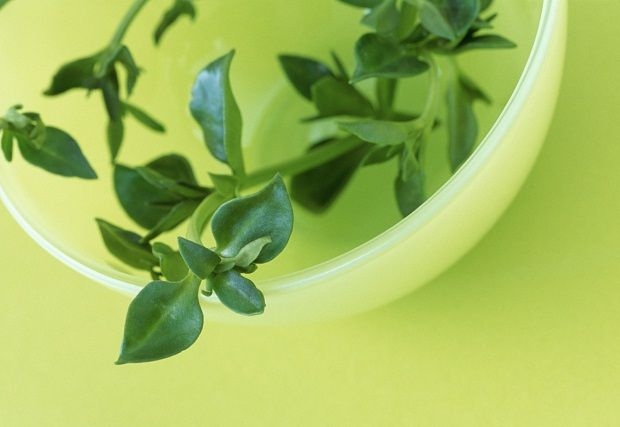 Thyme in bowl
