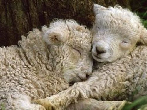 …vegan. Because its not our choice to make. Breeding animals merely to kill for tadte and fashion is morally wrong. Vegankit.com