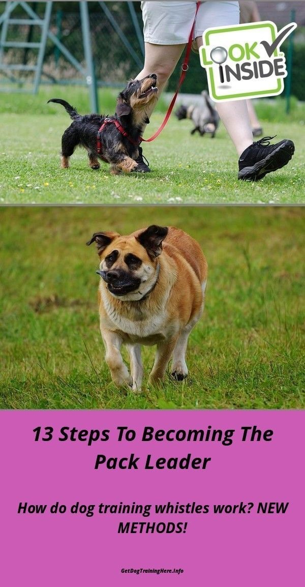 Train A Dog Not To Bark Dogtrainingtips Puppies Dog Training