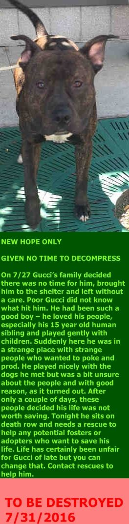 MURDERED 7/31/2016 --- Brooklyn Center  My name is GUCCI. My Animal ID # is A1082890. I am a male br brindle and white am pit bull ter mix. The shelter thinks I am about 2 YEARS  I came in the shelter as a OWNER SUR on 07/27/2016 from NY 11221, owner surrender reason stated was NO TIME.  http://nycdogs.urgentpodr.org/gucci-a1082890/