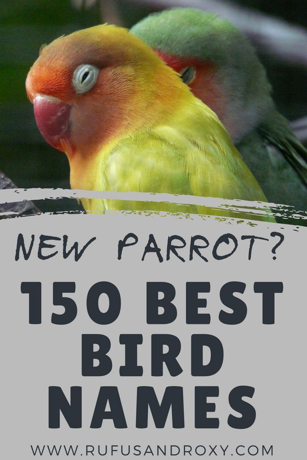 ⋆ 150 Top Bird Names for Your Feathered Friend ⋆ | Feathered