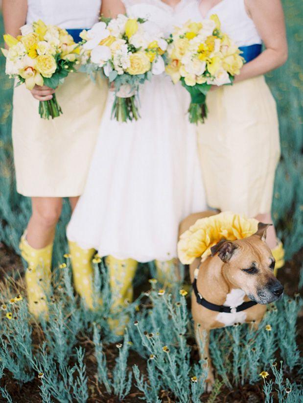 Sunrise Springs Wedding by Clary Pfeiffer