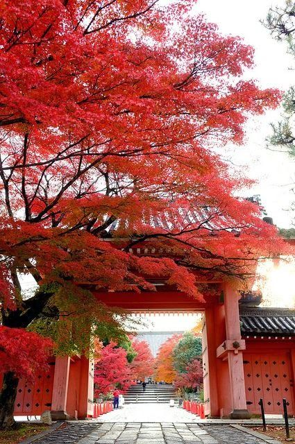 #Japan #iconic sights in #Kyoto