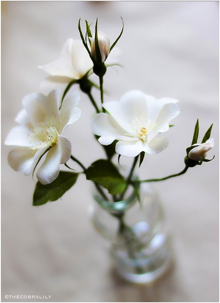white-roses-via-thecobralily-small