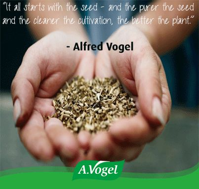 """""""It all starts with the seed - and the purer the seed and the cleaner the cultivation, the better the plant."""" - Alfred Vogel"""