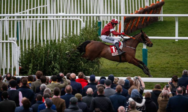 Cheltenham Gold Cup: Racecard, tips, form, odds and colours for the Cheltenham Gold Cup   Racing   Sport #CheltenhamGoldCup