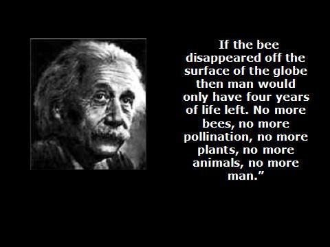 albert einstein bees quote is basically that einstein