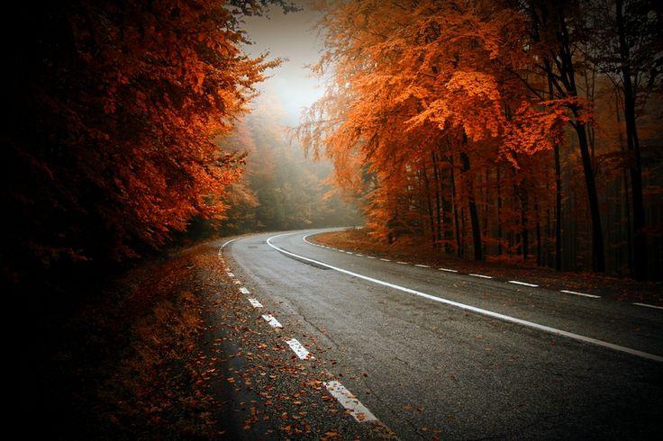 autumn way... by nicu hoandra on 500px