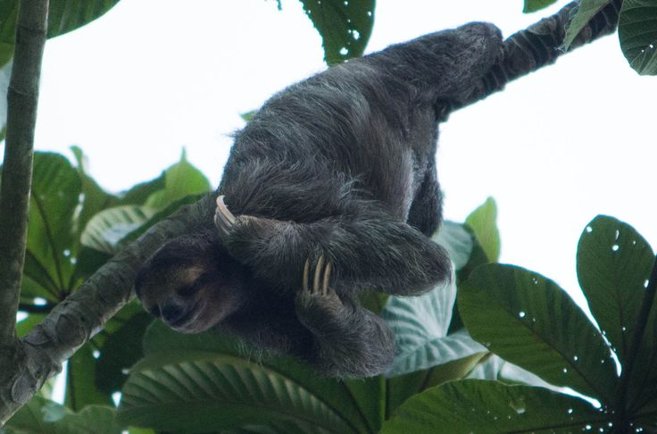 Every day of your itinerary includes exciting and memorable activities in some of the world's most important ecosystems.    See our website for more details - www.smithsonianjourneys.org/tours/panama-family/