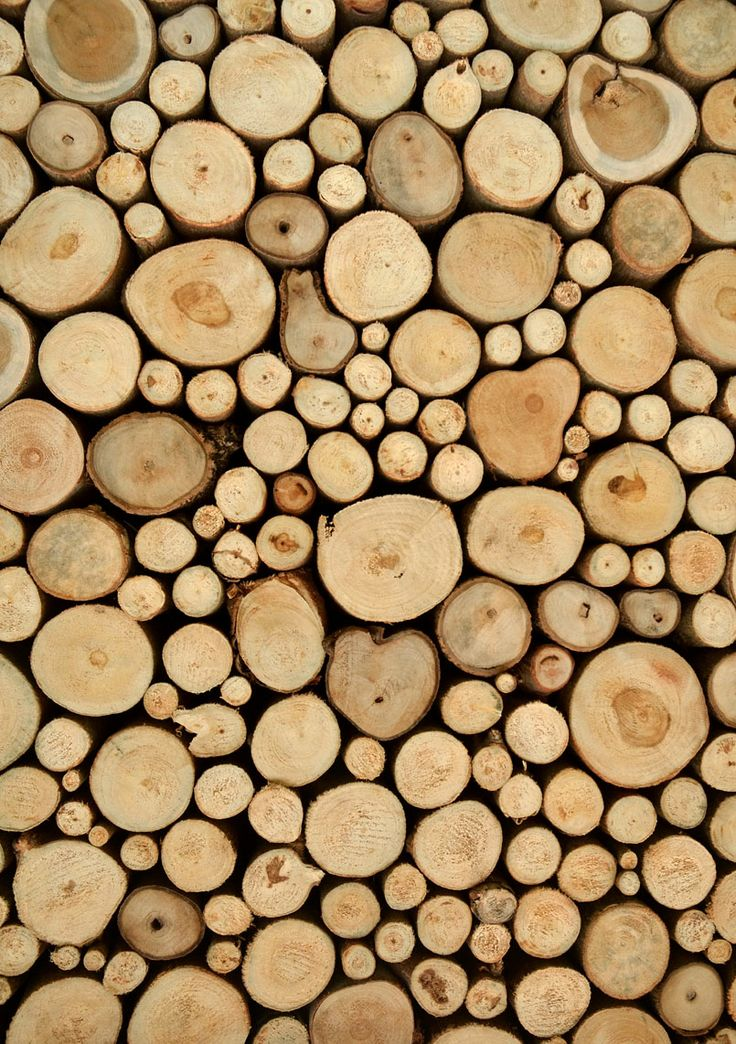 Cut Tree Stumps. Photograph by Eky Studio