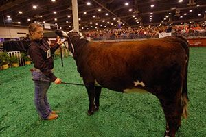 The Houston Livestock Show and Rodeo is the world's largest livestock show and rodeo dedicated to benefiting youth, supporting education, and facilitating better agricultural practices through exhibitions and presentation.