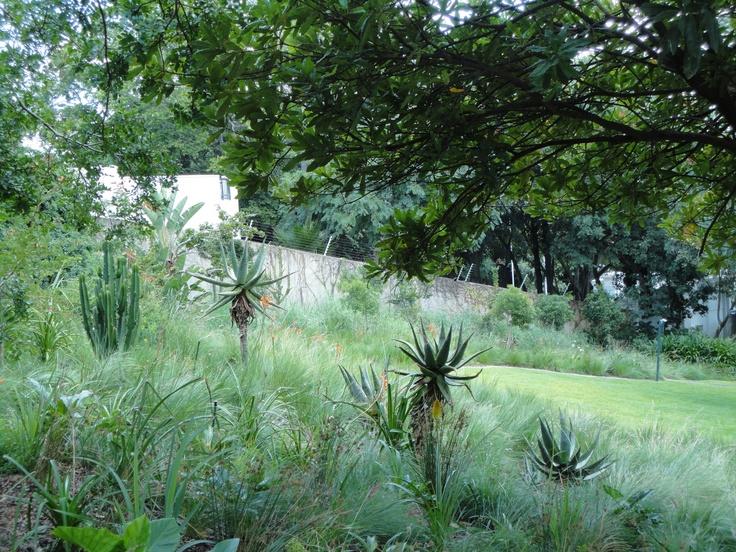 2010 - 2011 House Tucker @ Waterkloof, Pretoria - Veldgrass garden with aloes and indigenous bulbs
