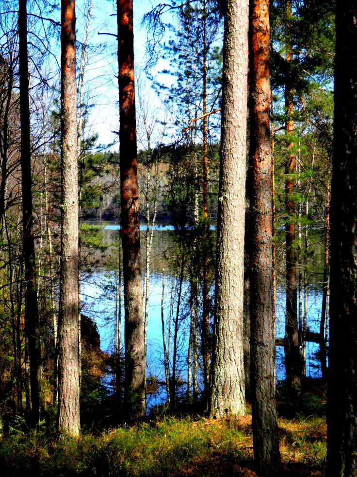 Spring time in Finnish forrest. Photography Päivi Sorri