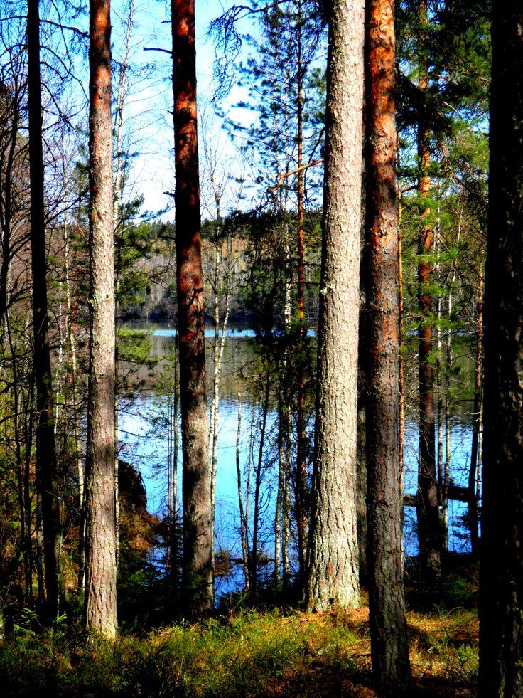 Spring time in Finnish forrest. Photography Päivi Sorri