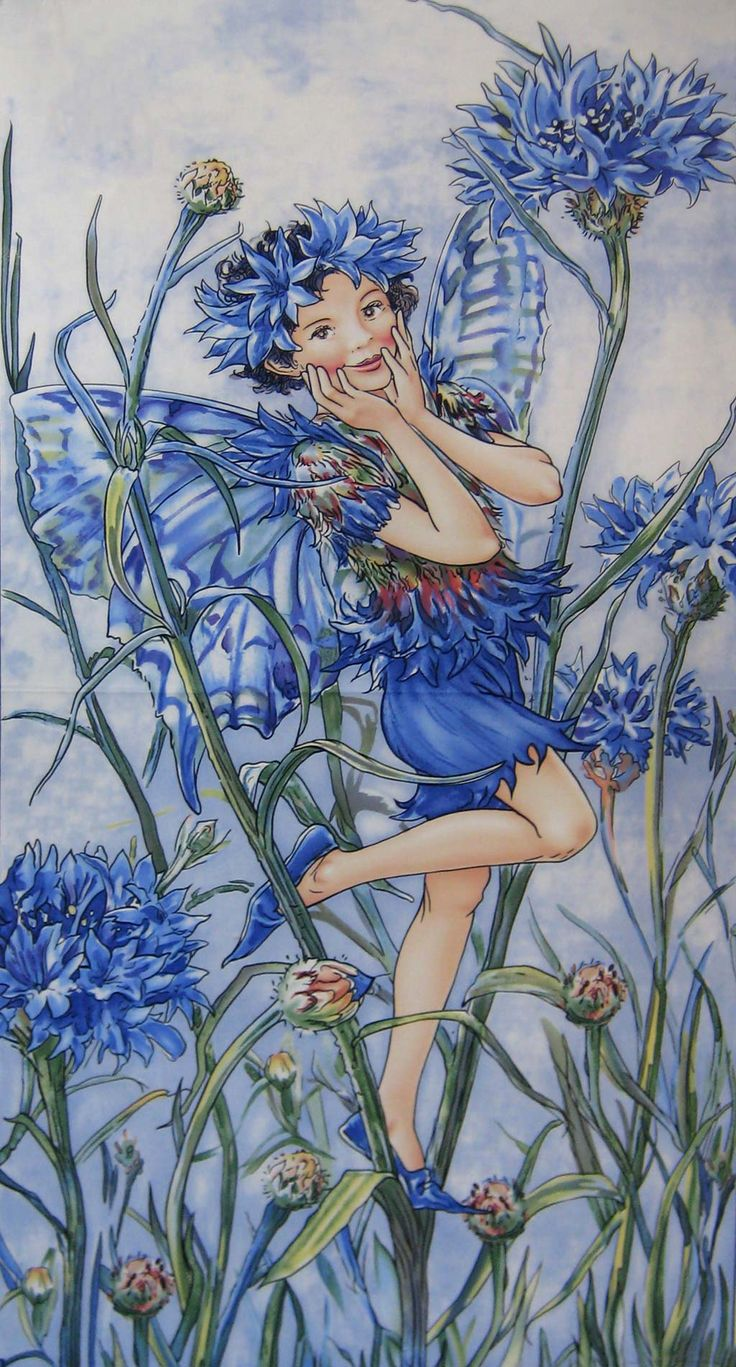 Blåklint - Cornflower Cicely Mary Barker                                                                                                                                                      More                                                                                                                                                      More