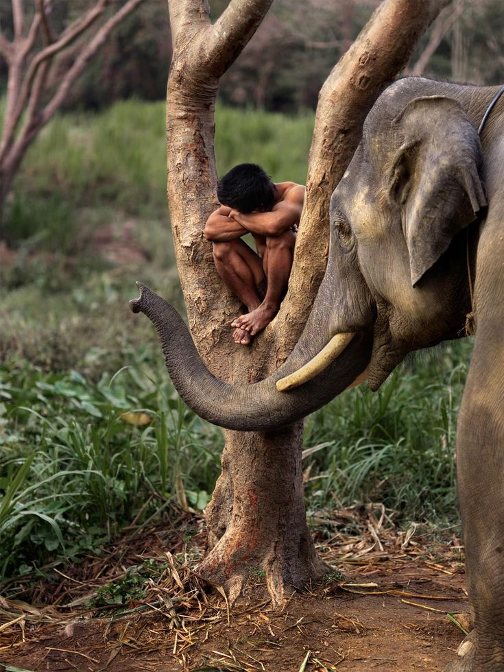 Chiang Mai, Thailand. Elephants | Steve McCurry