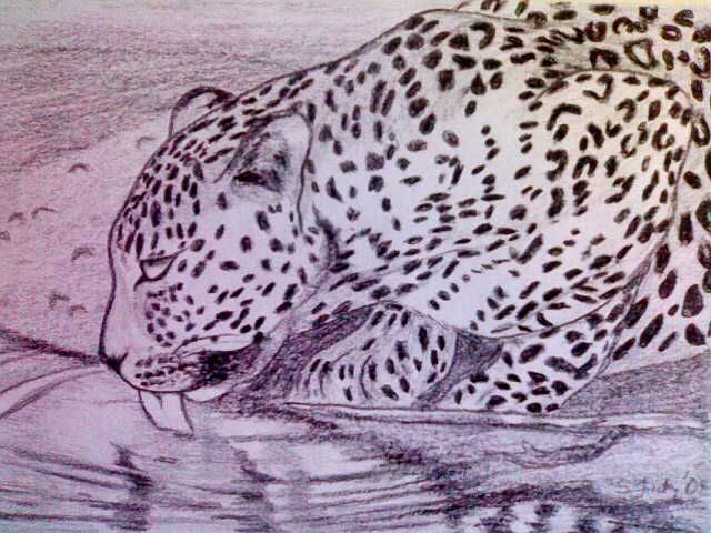 thirsty leopard, created by Samuel Friday, charcoal on A4.