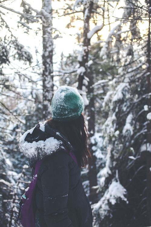 See the beauty of the forest in winter