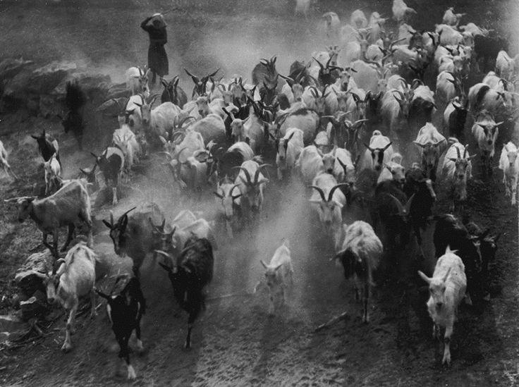 Poros úton, 1935 (a Magyar Fotográfiai Múzeum tulajdona)  © Vadas Ernő