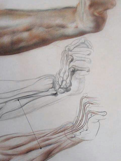 El Anatomi Çizimi