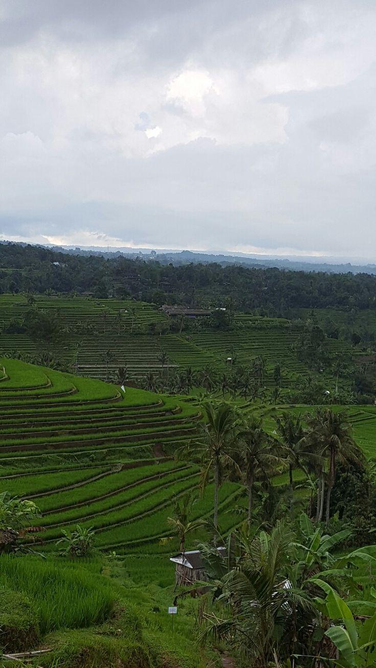 Rijstvelden Unesco Bali