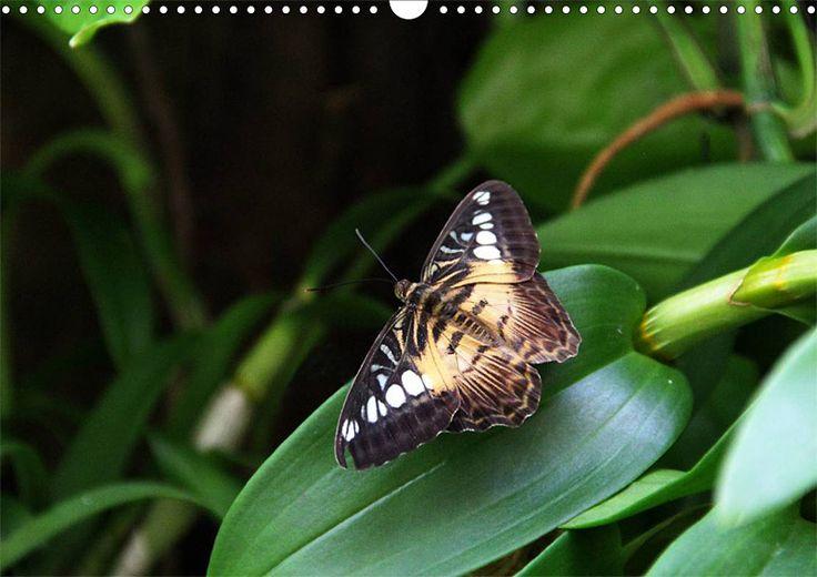 """Tier-Posterbuch """"Schmetterlinge der Tropen"""", Seite 12"""
