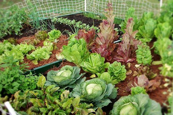 A négyzetméteres kertészkedés alapjai | Életszépítők