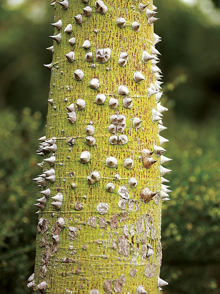 99 best Botany images on Pinterest Seeds, Mother nature and - griffe f r k chenm bel