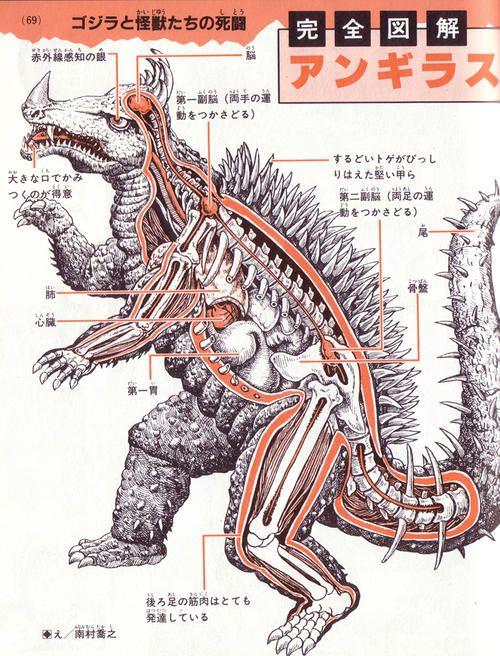 The anatomy of Anguirus.  Courtesy, presumably, of Toho's awesome psuedoscience department.