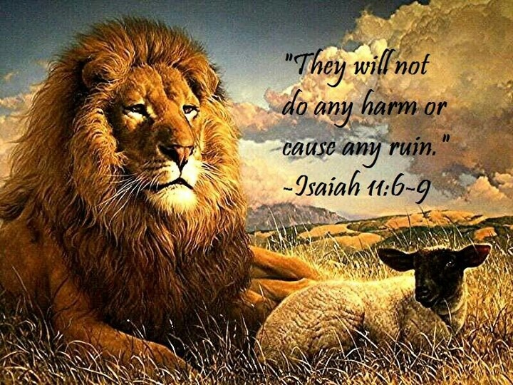 """""""They will not do any harm or cause any ruin."""" --  Isaiah 11:6-9 -- In Paradise…"""