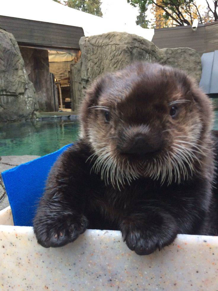 Toronto Zoo gets in on the #CuteAnimalTweetOff (with images ...