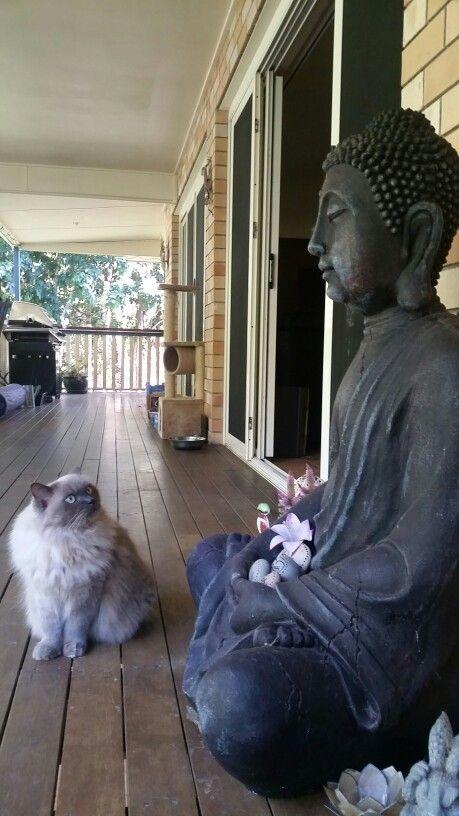 Bella and Buddha