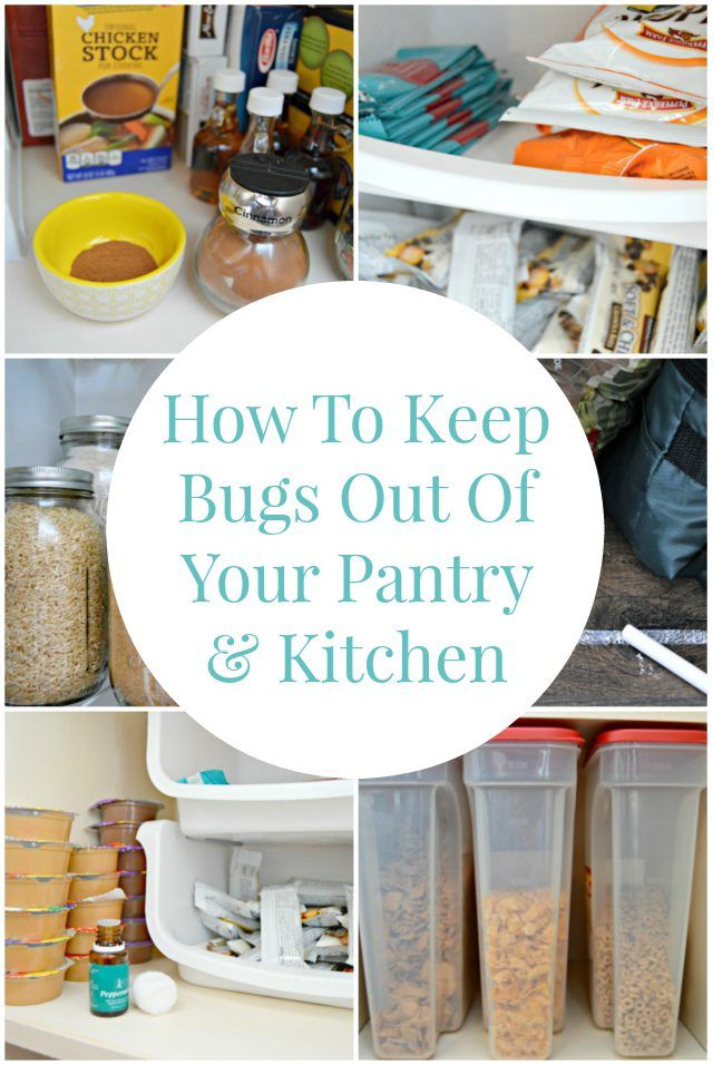 By using these simple tips, you can keep ants and other bugs out of your kitchen and pantry so you can rest easy and waste less food.