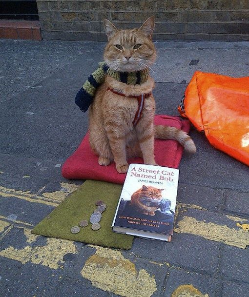 Street cat Bob gets his own book!