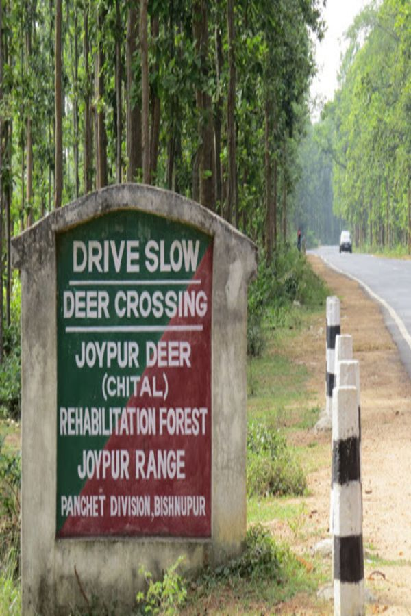 One Day Weekend Destinations Near Kolkata Travel Agent Travel Agency Forest