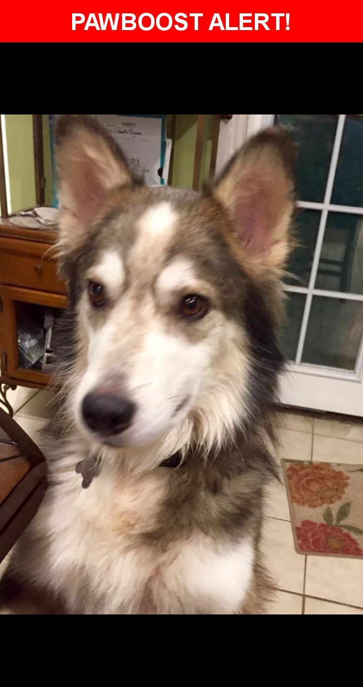 Husky puppies for sale yucca valley - Ace Was Last Seen In Yucca Valley Ca 92284 Description Male Wearing Gray And Black Collar Friendly Playful 6 7 Mont Pinterest