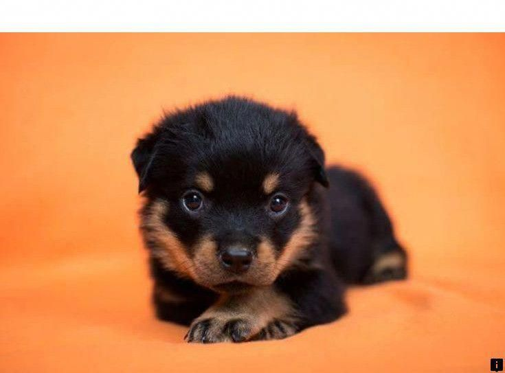 Discover More About Cocker Spaniel Follow The Link For More